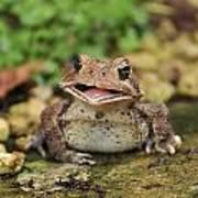 Happy Toad Art Print