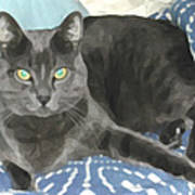 Smokey On A Blue Blanket Art Print