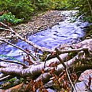 Smoky Mountain Stream Two Art Print