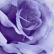 Smoky Purple Rose Flower Art Print