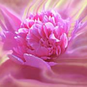 Smooth Pink Art Print