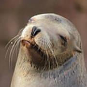 Smug Sea Lion Art Print