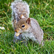 Snack Time For Squirrels Art Print
