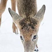 Snacking Deer Art Print