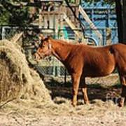 Snacking On Some Hay Art Print