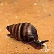 Snail Pace Art Print