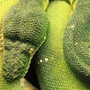 Snake In Green Dress Art Print