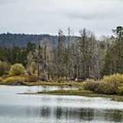Snake River Near Cattleman's Bridge Site -  Grand Tetons Art Print