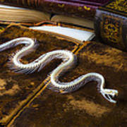 Snake Skeleton And Old Books Art Print