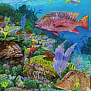 Snapper Reef Re0028 Art Print