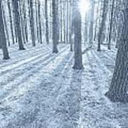 Snow Amongst The Pines Art Print