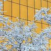 Snow And Golden Glass Art Print