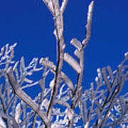 Snow And Ice Coated Branches Art Print