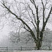 Snow And Pecan Tree Art Print
