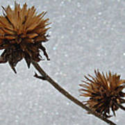 Snow And Thistles Art Print
