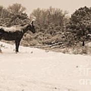 Snow Bound Horse Art Print