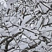 Snow Branches 2-1-15 Art Print