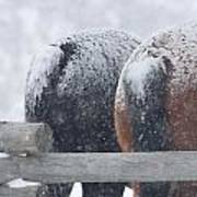 Snow Butts Art Print