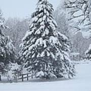 Snow Conifer 2-1-15 Art Print