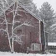 Snow Covered Birch Tree And A Red Barn. Art Print