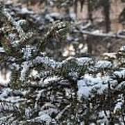 Snow Covered Branches Art Print by Brett Geyer