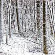 Snow Covered Forest 4 Art Print