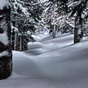 Snow Covered Trail Art Print