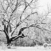 Snow Covered Tree Art Print