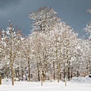 Snow Covered Trees In The Forest In Winter Art Print by Matthias Hauser
