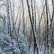 Snow Falls On The Alders  Astoria Art Print