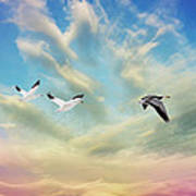 Snow Geese Over New Melle Art Print by Bill Tiepelman