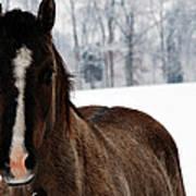 Snow Horse Art Print