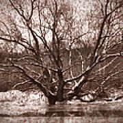 Snow Imp 1 - Tree Covered With Snow January 2014 Art Print