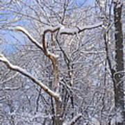 Snow In Connecticut Art Print