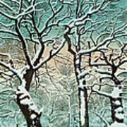 Snow In Forest Art Print