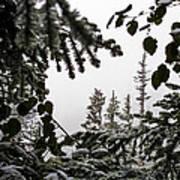 Snow In Trees At Narada Falls II Art Print