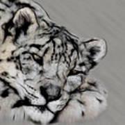 Snow Leopard Digital Art Art Print