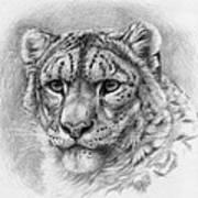 Snow Leopard - Panthera Uncia Art Print