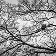 Snow On Bare Branches Art Print