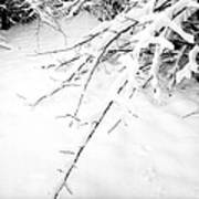 Snow On Branch Art Print