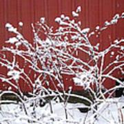 Snow On Burdock Burr Weed Against Red Barn Siding Art Print