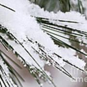 Snow On Pine Needles Art Print