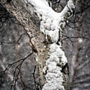 Snow On The Birch Art Print