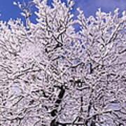 Snow On Tree Art Print