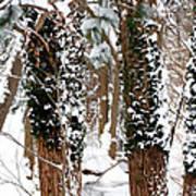 Snow On Tress 2 Art Print