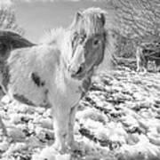 Snow Ponies Art Print