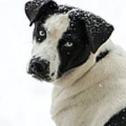 Snow Puppy Art Print