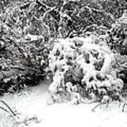 Snow Scene 1 Art Print by Patrick J Murphy