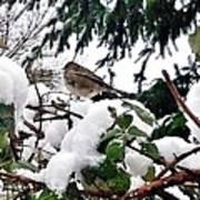 Snow Scene Of Little Bird Perched Art Print
