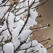 Snow Shower Art Print